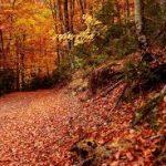 especial rutas de otoño